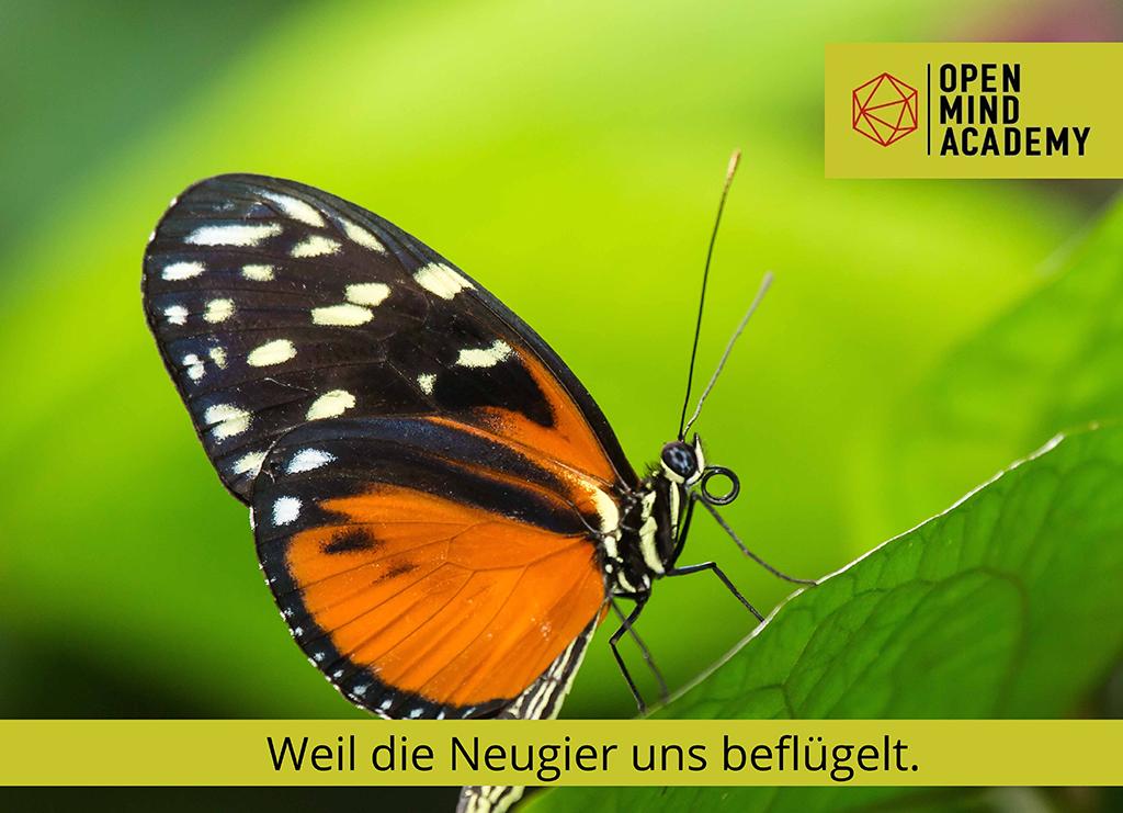 Schmetterling Unser Ansatz